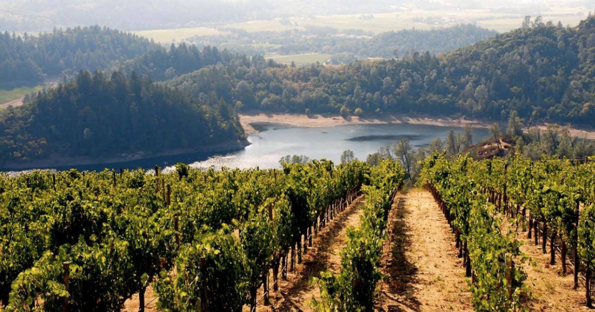 Kosher California Wines