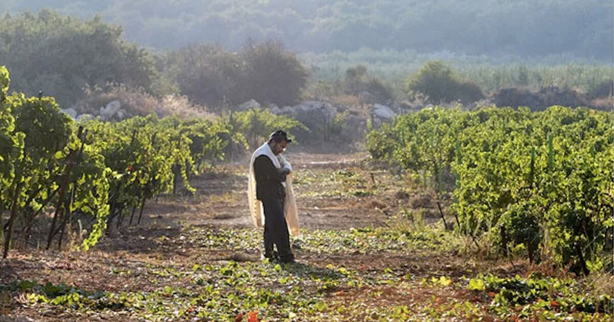 Learn More about Kosher Israeli Wines